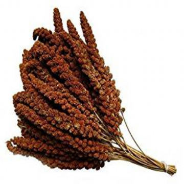 Pet Ting French Red Millet Sprays 250g